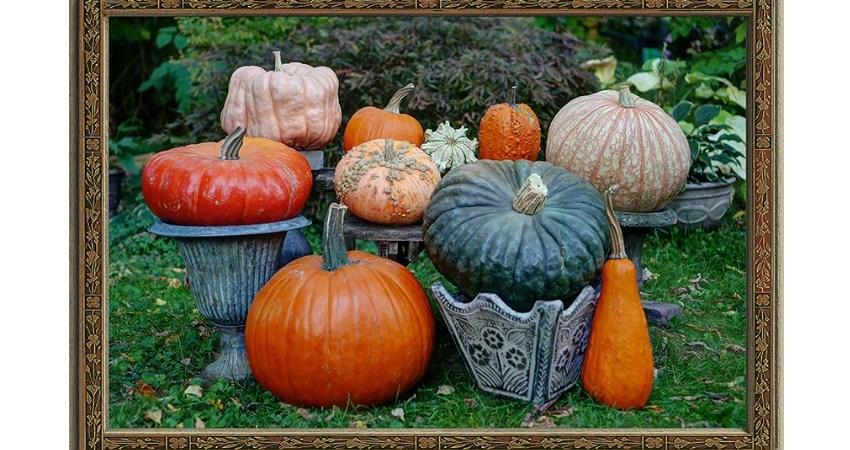 Portraits of the Pumpkins