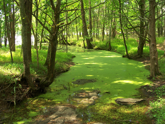 Green Nature - Eco Friendly Wallpapers
