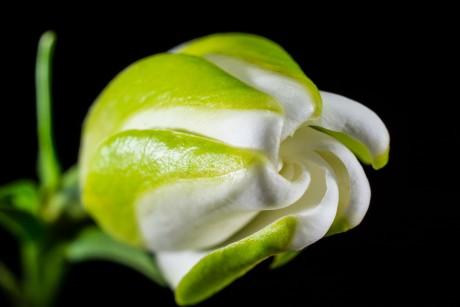 blossom-301359_1920