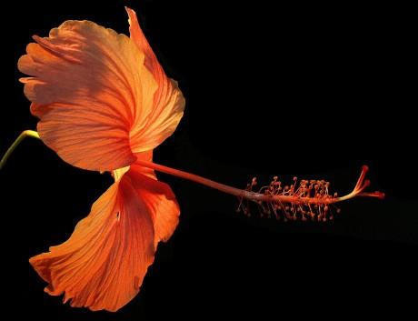 flower-182407_1920