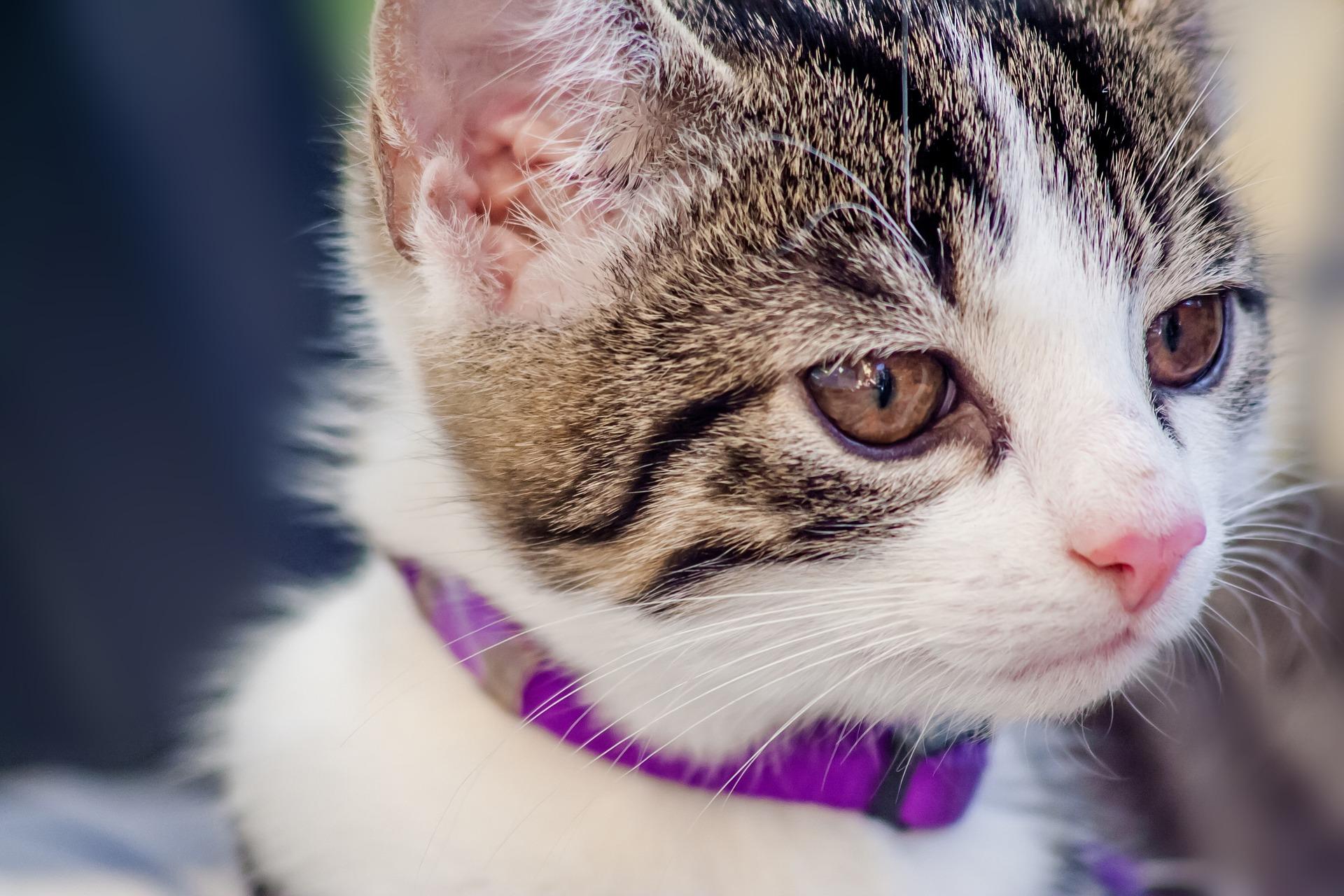 cat-919661_1920