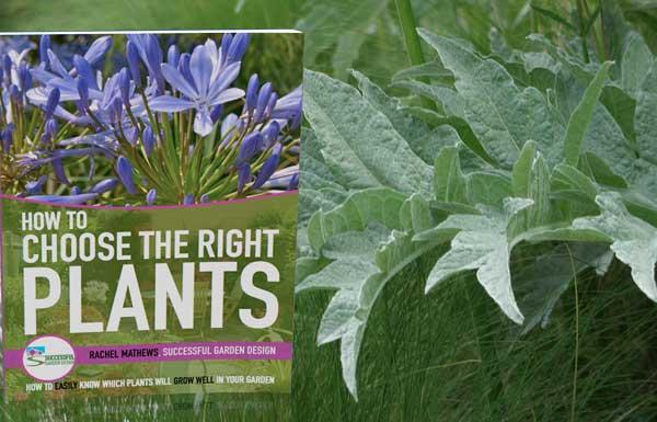 Choosing plants for your garden for Choosing plants for landscaping