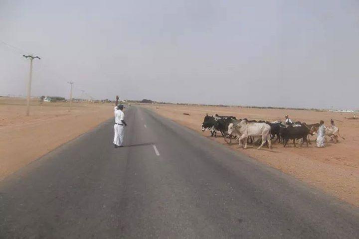 إعادة مواد غير مطابقة لصيانة طريق الخرطوم ــ مدني
