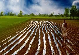 الدخيري : التكامل العربي الزراعي سبيلٌ لسد الفجوة الغذائية