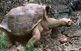 """بالصورة: السلحفاة جوناثان.. """"أكبر مخلوق على وجه الأرض يكمل عامه الـ 183"""""""