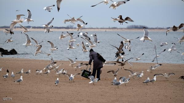 نيويورك تطفئ أنوارها للطيور المهاجرة
