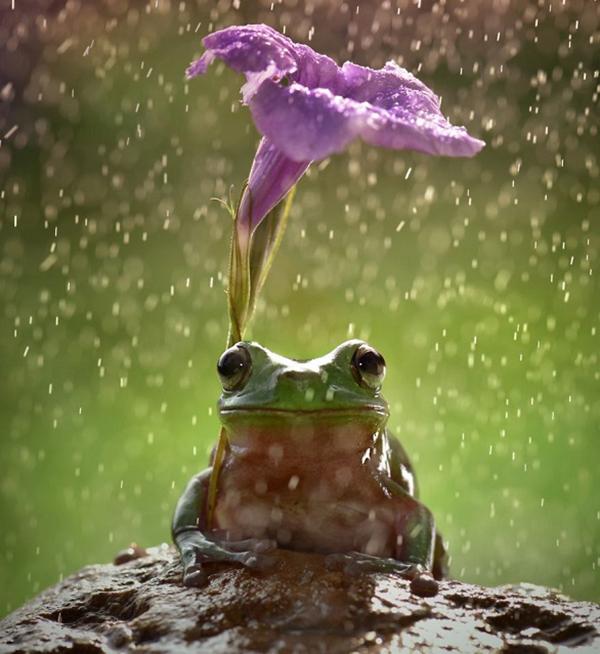 صور طريفة: كائنات صغيرة تحمل المظلات تحت المطر