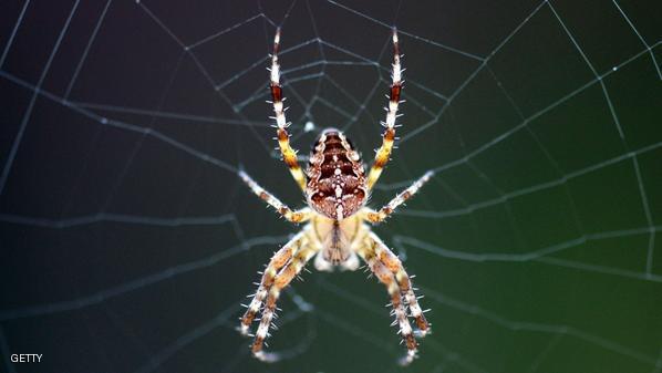 5 أسباب تجعلنا نحب العناكب
