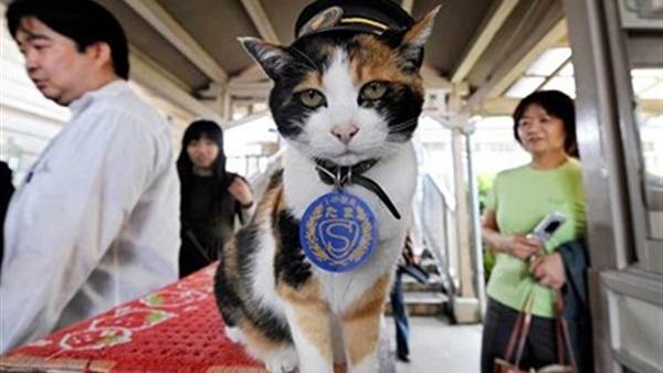 """وفاة القطة """"مديرة"""" محطة القطار في اليابان"""