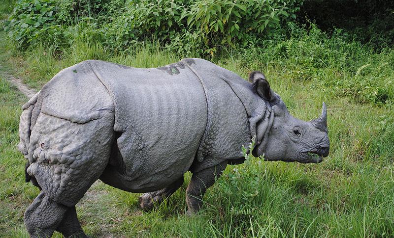 استنساخ قرون وحيد القرن لحمايته من الانقراض