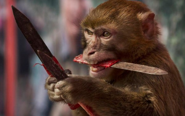 قرد سكران يطارد زبائن بار بالسكين