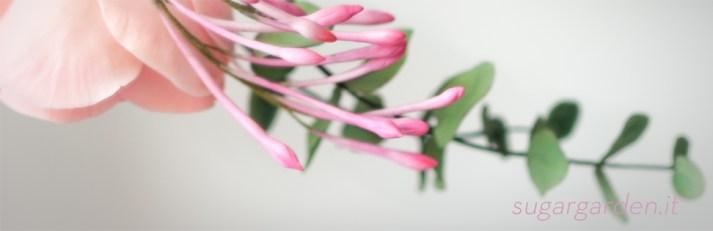 Jasmine & Eucalyptus