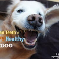 Say NO To Dental Disease, Brush Your Dog's Teeth