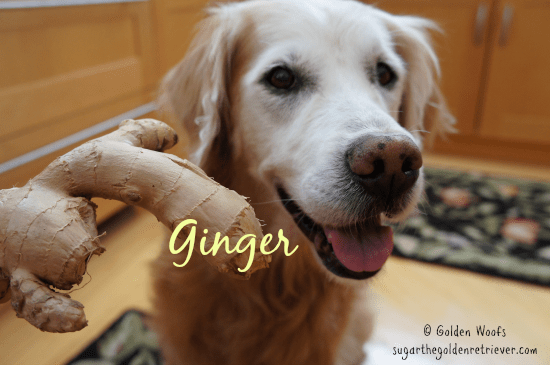 Ginger and Dogs