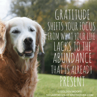3 Gratitude Quotes for Thanksgiving