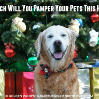 How Much Will You Pamper Your Pets This Holiday? + Infographic