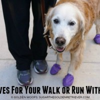 Must Haves for Your Walk or Run With Your Dog