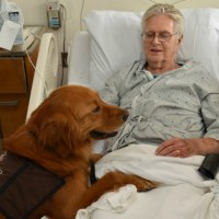 Animal-Assisted Therapy: Is Medicine Going to the Dogs?