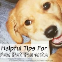 5 Helpful Tips For New Pet Parents #NewPetPartner