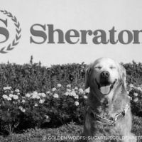 S for SUGAR at Dog Friendly Sheraton Carlsbad