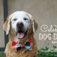Celebrate Dog Day Every Day
