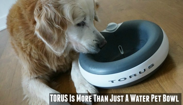 6 Reasons TORUS Is More Than Just A Water Pet Bowl