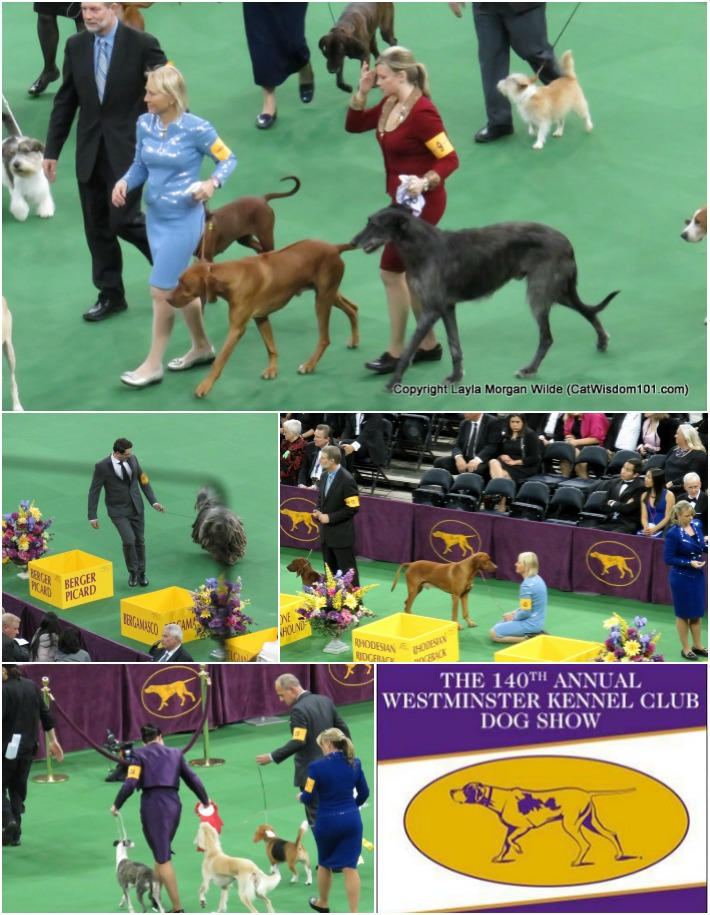 140th westminster kennel club dog show