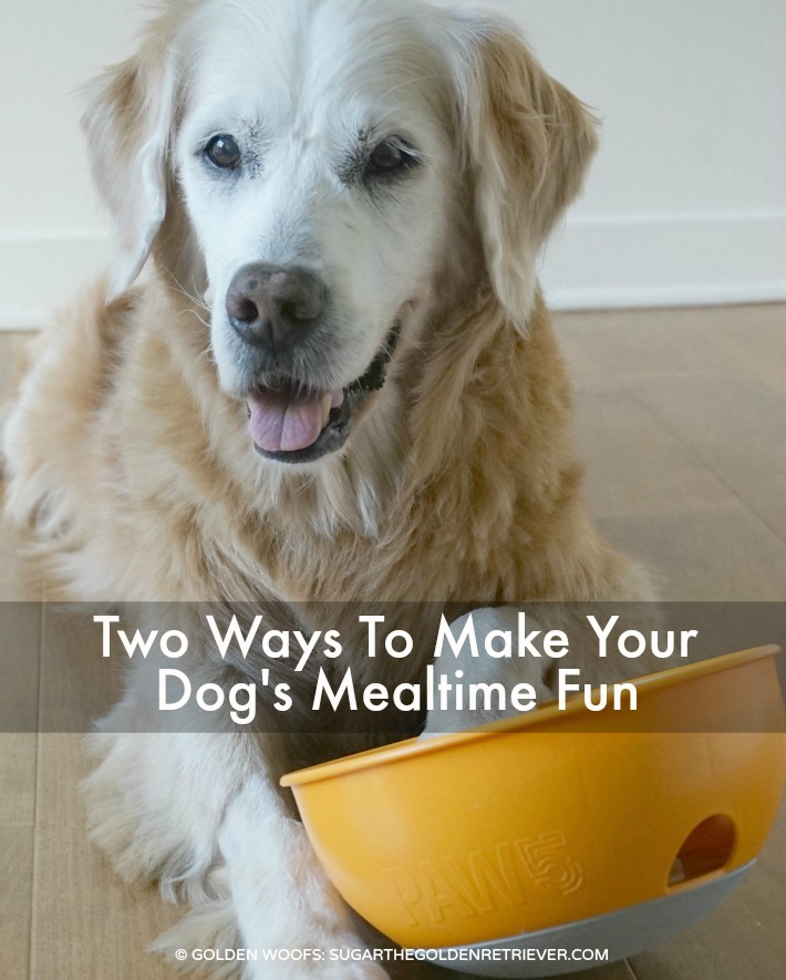 two ways to make your dog s mealtime fun paw5   sugar the
