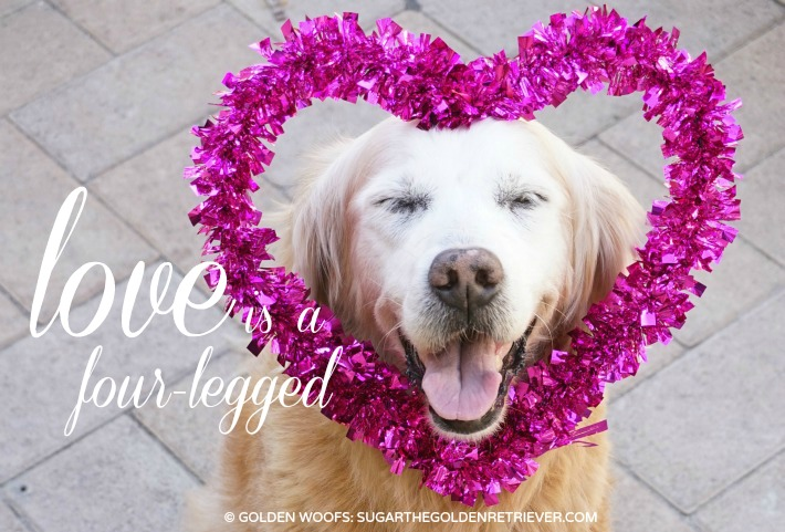 {This Moment} See Beautiful Four Legged Love