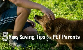 5 Money Saving Tips for Pet Parents