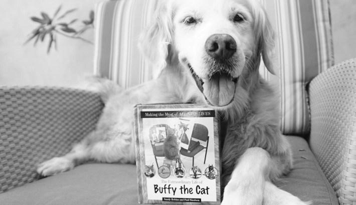 Sugar Reads Cat Book | Buffy the Cat