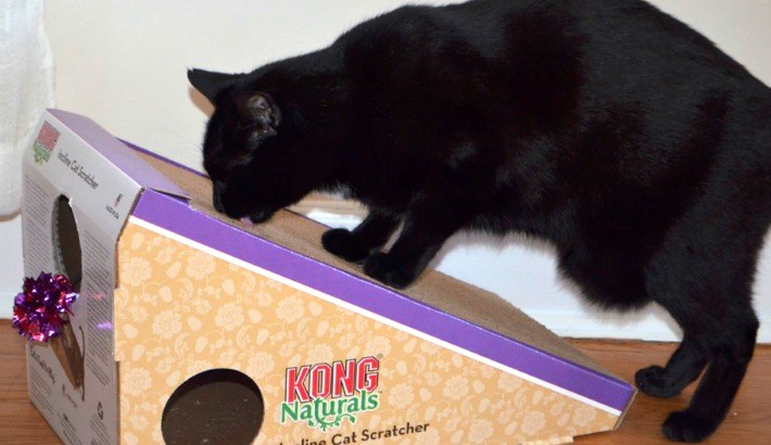 Maynard's KONG Cat Scratcher from Chewy.com #ChewyInfluencer