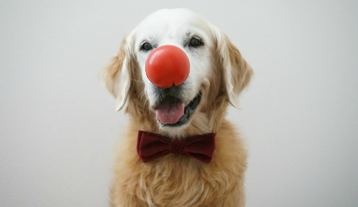Get Silly & Help Fight Kids Poverty: Red Nose Day