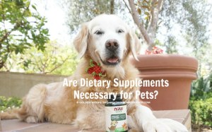 Are Dietary Supplements Necessary for Pets? #NOWpetsSweeps