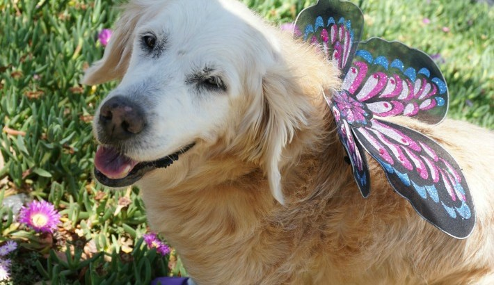 Butterfly Dog: Dress Up for Whitley