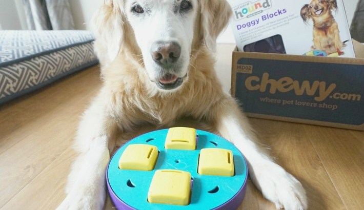 Doggy Blocks Dog Game  #ChewyInfluencer