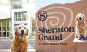 Luxury Dog Friendly Accommodation Sheraton Grand