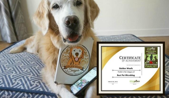 #BlogPaws Finalist Best Pet Microblog|Conference Instagram Tips