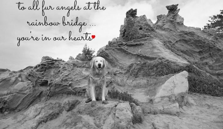 To All Fur Angels At The Rainbow Bridge