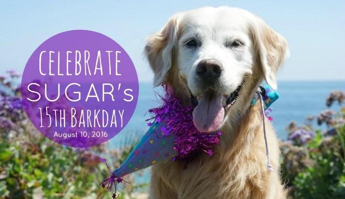 Celebrate SUGAR's 15th Barkday