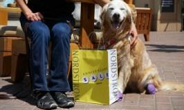 For Dog Moms Versatile Jambu Oklahoma Slip On Sneaker #JambuNordstrom
