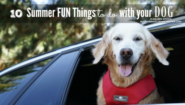 10 Summer Fun Things to do With Your Dog and #BeSleepypodSafe