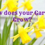 How does your Garden Grow?