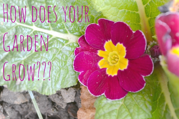 How does your Garden Grow Purple Pansies