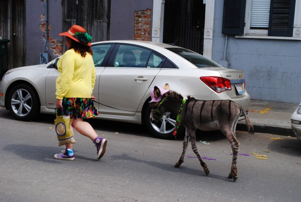 Just out walking a baby, zebra-striped mule.  Nothing to see here.
