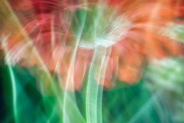 Janice Sullivan's fine art work of a daisy.  Macro Lens Painting.
