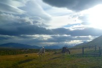 Horse riding through striking Patagonian landscapes, near El Calafate, Patagonia Argentina