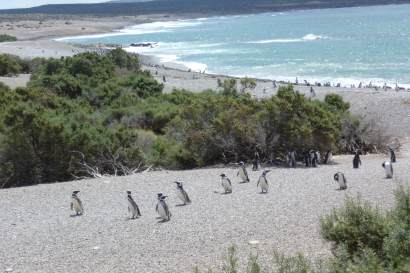 Penguin Reserve in Punta Tombo, near Trelew, Patagonia Argentina