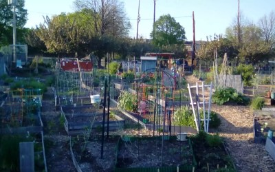 Blogging from the garden