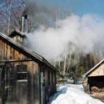Steam rising from the Sugar Shack